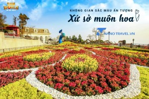 Lễ hội hoa Tulip bà nà hill lớn nhất Việt nam